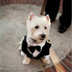 Wedding-Dog-Tux